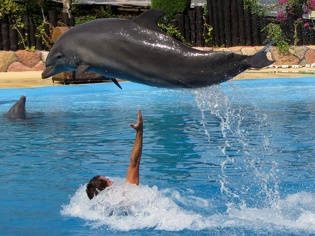 Mundomar Dolphin Show