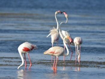 Flamingos in Doñana National Park