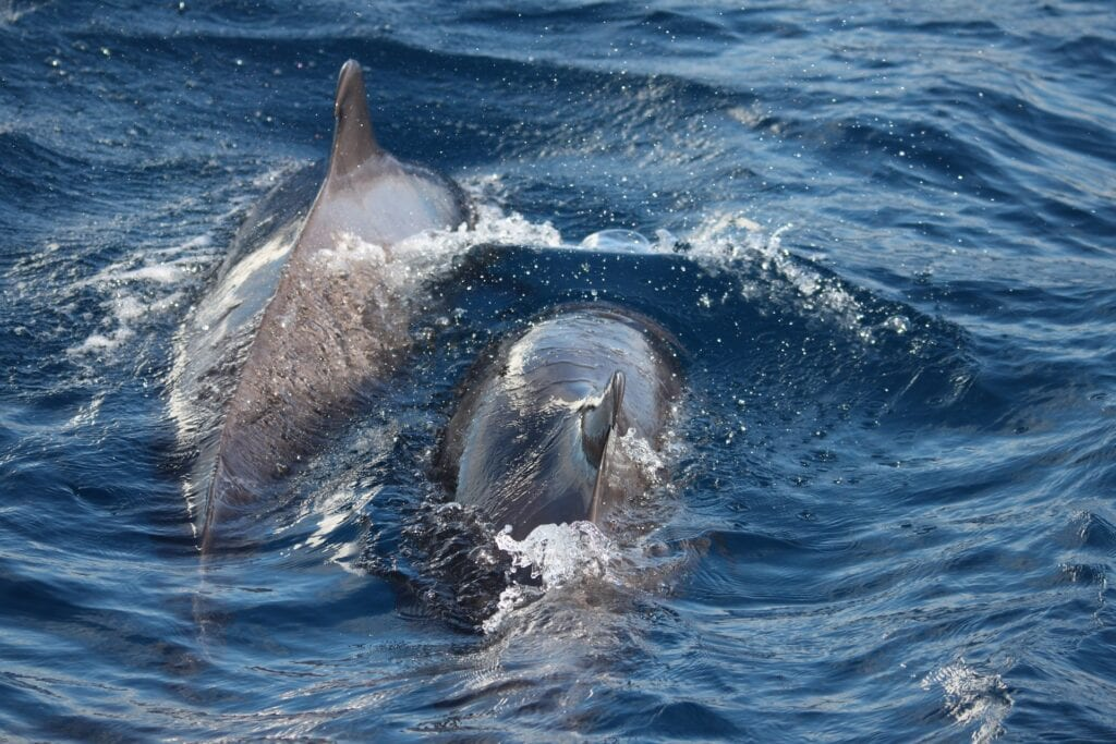 Dolphin watching Boat Trips