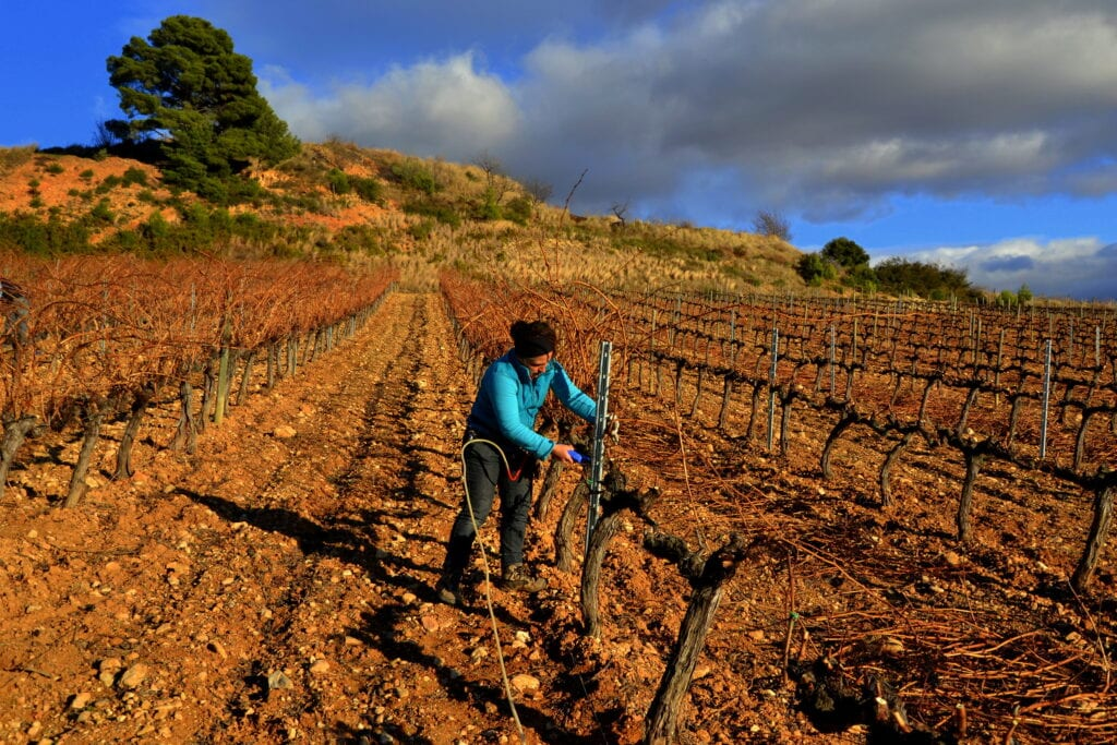 Caring for the Vines in Alt Penedès